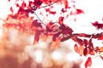 Autumn by deex-helios