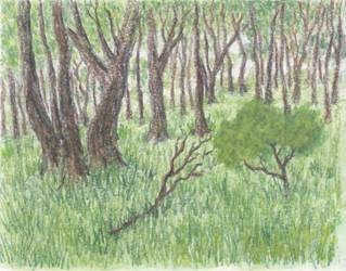 Forest by EskelKreig