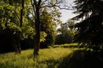 Park trees sunlight by EskelKreig