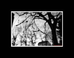 The Dawning by Trippy4U