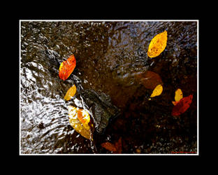 One Last Autumnal Ramble I by Trippy4U