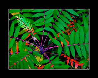 One Last Autumnal Ramble II by Trippy4U