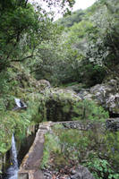 Levada, somewhere in Madeira.. by Samijabrothers