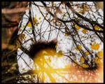 Squirrel by EshekiAmira
