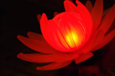 Night Flower - Red by Quirpie