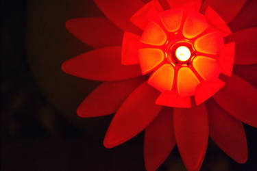 Night flower - Red II by Quirpie