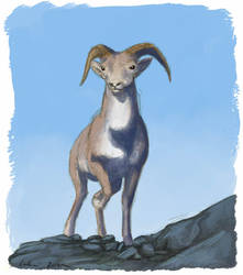 Peabody Sheep Sketch - Coloured by Luthrai