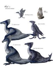 D. cristatus- Profile by Luthrai