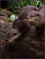 Animal Photos: Otter Madness by Bear-hybrid