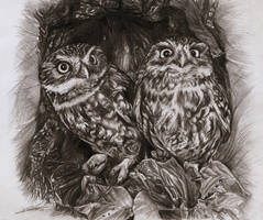 Owlets by AmBr0
