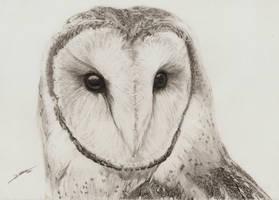 Barn Owl by AmBr0