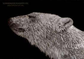 Polar Bear by AmBr0