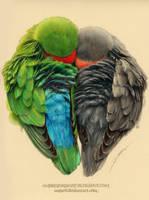Lovebirds by AmBr0