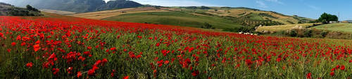 Malaga Countryside by AmBr0