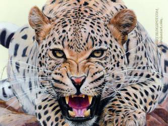 Leopard by AmBr0