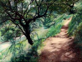 Footpath by AmBr0