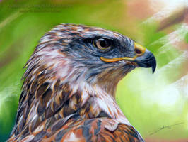 Ferruginous Hawk by AmBr0