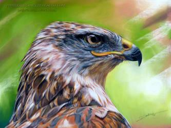 Ferruginous Hawk by AmBr0