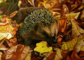 Hedgehog by AmBr0