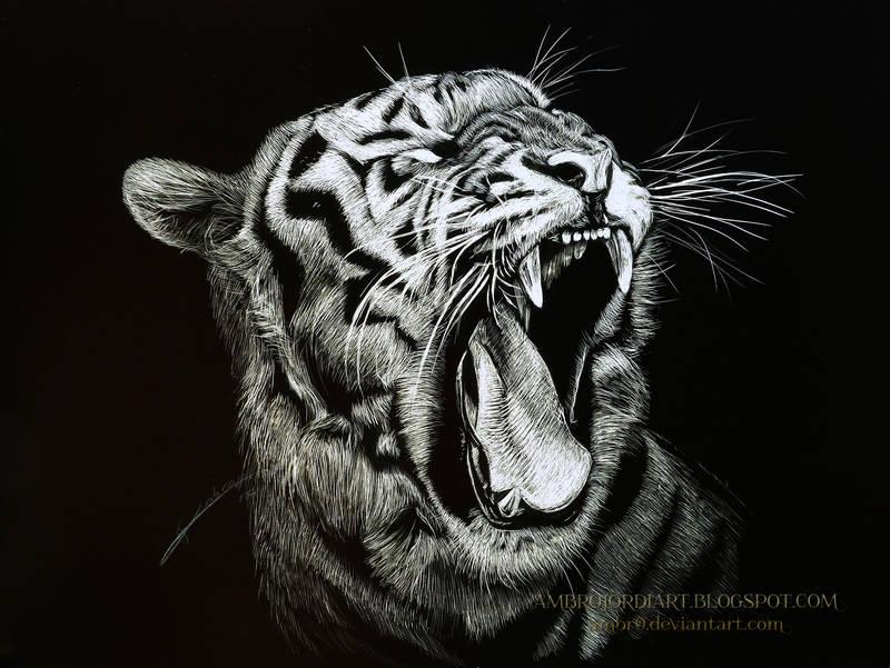 Tiger Scratchboard by AmBr0