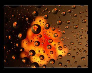 Morning Dew by Angeluz-