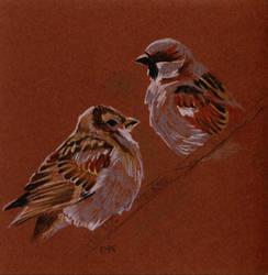 sparrows by DorotaK