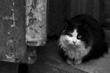 The cat in bazaar by Sadeq-Photography