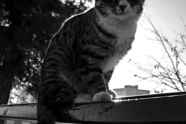 Mr. cat by Sadeq-Photography