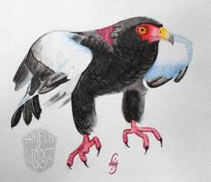 Bateleur Eagle in Watercolor by LiHy