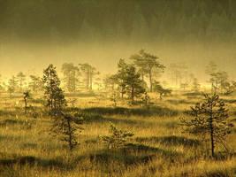 'Morning Gold' by Suensyan