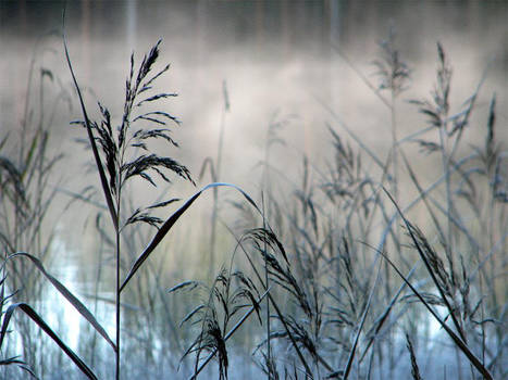 'For the Winter' by Suensyan