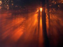 'Magical forest' by Suensyan