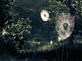 17.7.2010: Webs by Suensyan