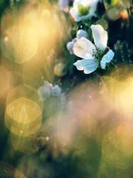 31.5.2011: Cloudberry Flower by Suensyan