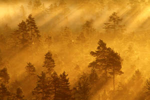 27.8.2013: Morning in Torronsuo National Park I by Suensyan