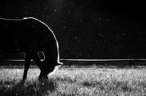 25.7.2014: Horse and Mosquitos II by Suensyan