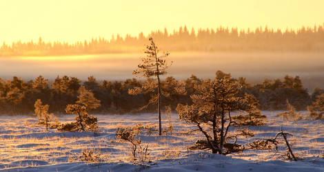 29.12.2014: Sunrise with -23 Celsius by Suensyan