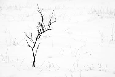 30.12.2014: Naked Birch by Suensyan
