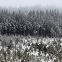 31.1.2018: Same Old View by Suensyan