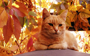 Ginger cat by Brymcha