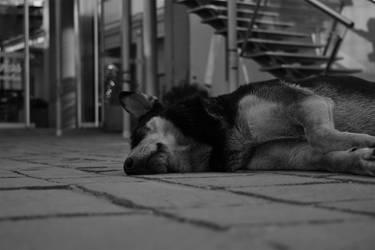Resting by mirkoemir