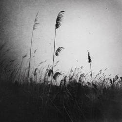 sesizlik by Grauenartt