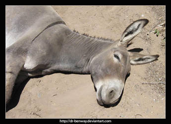 Happy Donkey by Dr-Benway
