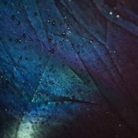 Shimmer by redwolf518