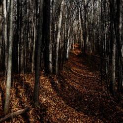 Dark Wood by redwolf518