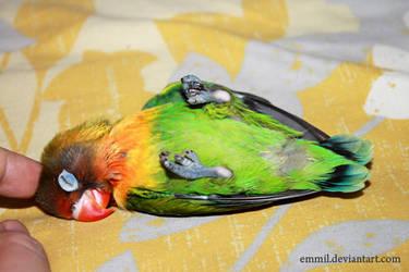 Sweet Peewee by emmil