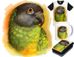Senegal parrot by emmil