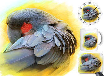 For Sale: Black Palm cockatoo by emmil