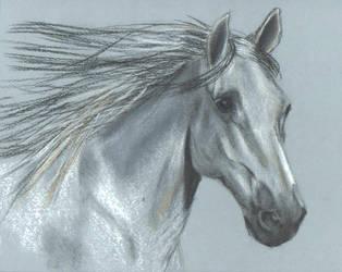 Arabian horse head in pastel by catuvalencia