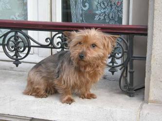 parisien dog by chrisramalho